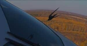 Столкновение птицы и самолета